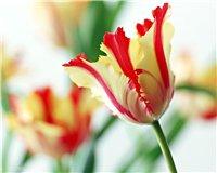 Цветочки-c15